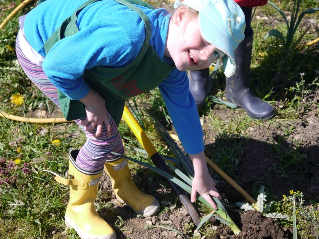 Digging leeks