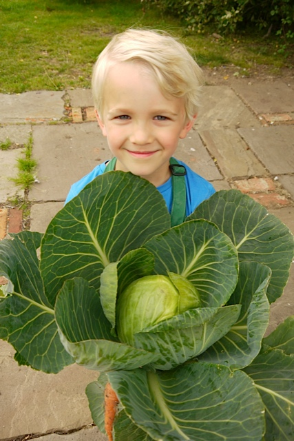 cabbage-from-the-garden