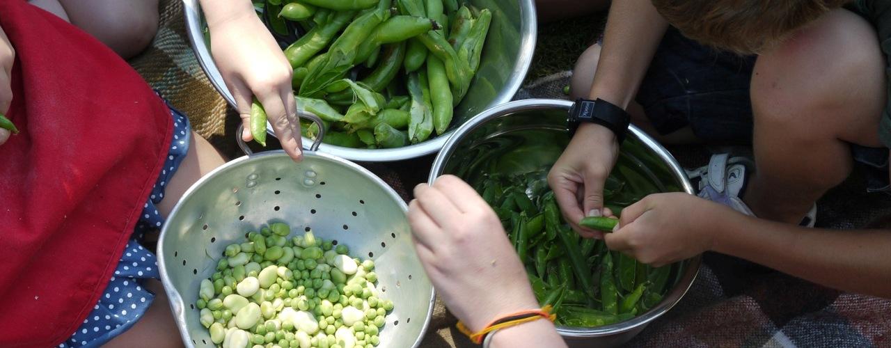large-shelling-peas