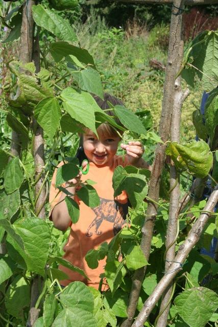 pickling-beans