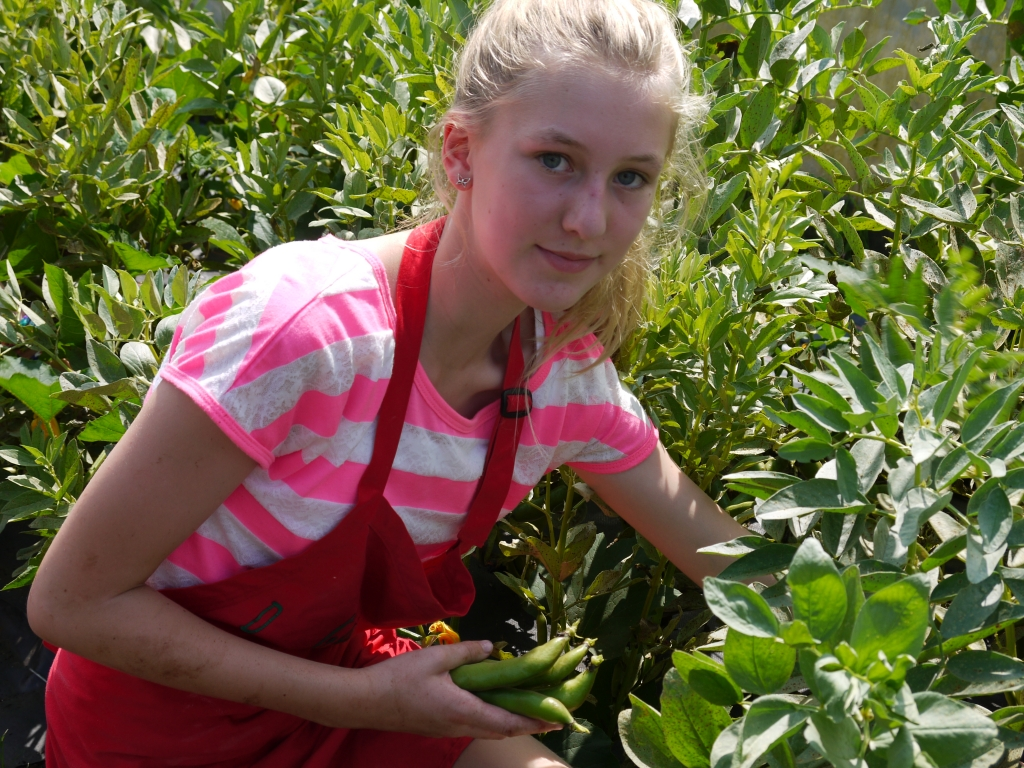 Emma picking broad beans