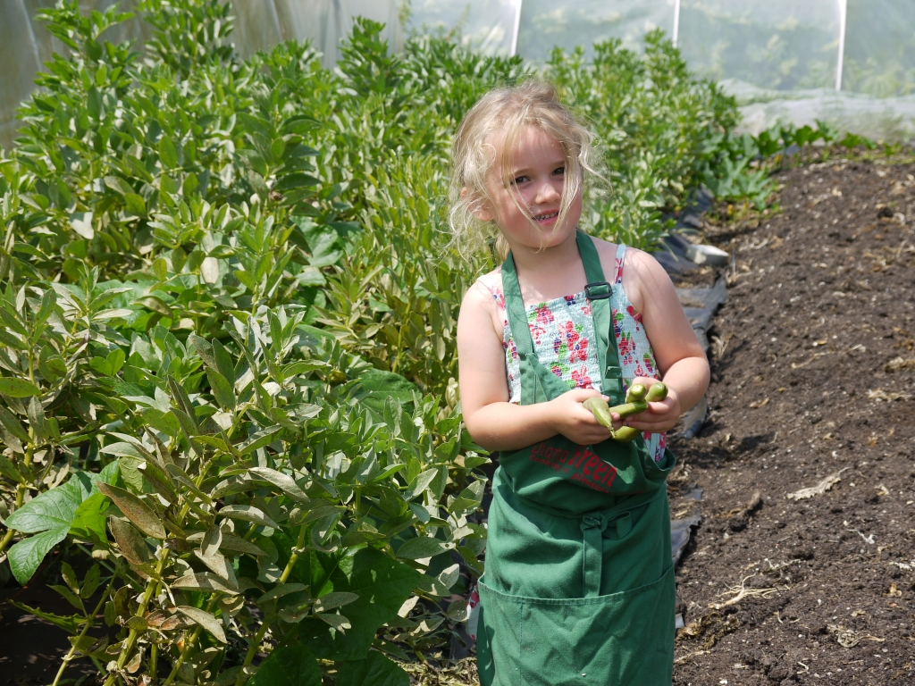 Anna picking broad beans