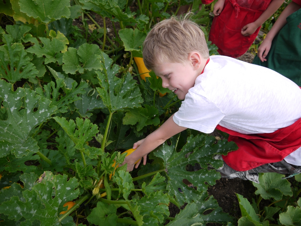 Zac looking for courgette