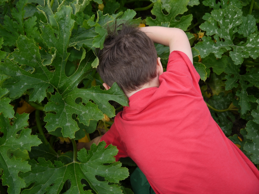 Danny searching for courgettes