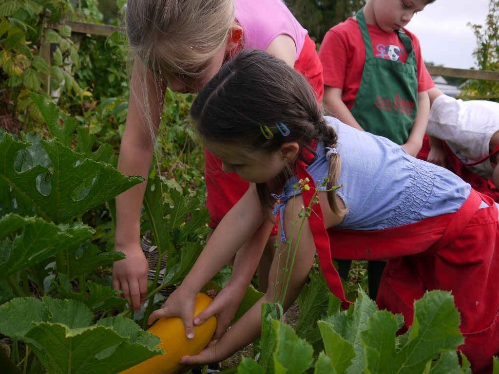 Olivia & Abbie picking courgettes