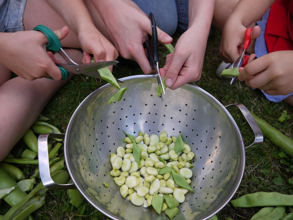 Preparing beans